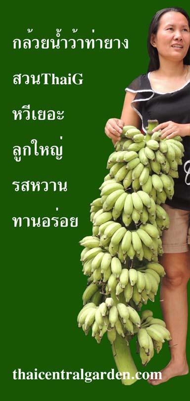 กล้วยน้ำว้าท่ายาง หวีเยอะ ลูกใหญ่ ไส้นุ่ม รสหวานทานอร่อย