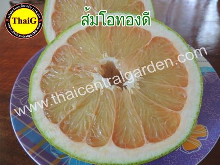 ส้มโอทองดี รสชาดหวานอมเปรี้ยว